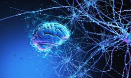 être humain du cerveau 3d photos libres de droits