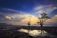 Silhouette d'arbre et de coucher du soleil sur la plage silencieuse Images libres de droits