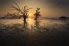 Silhouette d'arbre et de coucher du soleil sur la plage silencieuse Photos stock