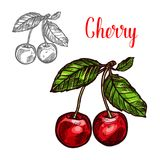 Ícone da baga do fruto do esboço do vetor da cereja Foto de Stock Royalty Free
