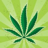 Ícone da folha do cannabis Fotos de Stock Royalty Free