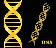 Ícone do ADN do ouro Ilustração do vetor no fundo preto Fotos de Stock Royalty Free