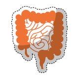 Ícone do intestino do órgão humano ilustração stock