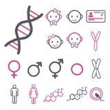 Ícone do vetor ajustado criando o infographics relativo ao gênero, ao transgender e ao Intersex como o ADN, os cromossomas, o hom ilustração stock