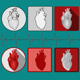 Ícone humano do coração com cardiograma - vetor Fotografia de Stock Royalty Free