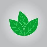 Ícone verde da folha Fotos de Stock