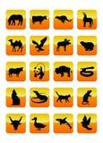Ícones 03 dos animais Fotografia de Stock