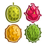 Ícones ajustados do vetor de frutos exóticos coloridos ilustração stock