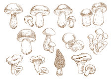 Ícones comestíveis do desenho de esboço dos cogumelos Fotos de Stock