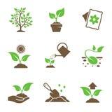 Ícones crescentes da planta ajustados Imagem de Stock Royalty Free
