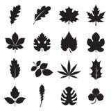 Ícones da folha isolados em um fundo branco Foto de Stock