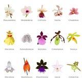 Ícones da orquídea Imagem de Stock Royalty Free