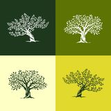 Ícones da silhueta da oliveira ajustados Foto de Stock Royalty Free
