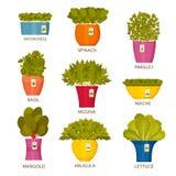 Ícones de jardinagem internos com alface ilustração do vetor
