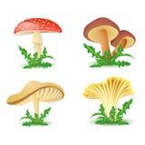 Ícones do cogumelo Fotografia de Stock Royalty Free
