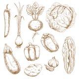 Ícones do esboço de vegetais da exploração agrícola e do jardim Fotos de Stock Royalty Free