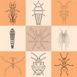Ícones do inseto ajustados Imagens de Stock