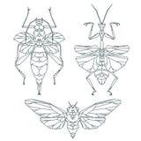 Ícones do inseto, grupo do vetor Estilo triangular abstrato mantis Fotografia de Stock Royalty Free