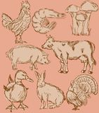 Ícones do sabor do alimento ajustados: animais de exploração agrícola Fotografia de Stock