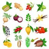 Ícones do superfood do vetor ajustados ilustração stock
