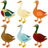 Ícones do vetor: Patos, ganso, gansos Foto de Stock Royalty Free