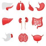 Ícones dos órgãos humanos no fundo branco Fotografia de Stock Royalty Free