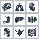 Ícones dos órgãos internos do vetor ajustados Imagem de Stock