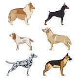 Ícones dos cães ajustados Foto de Stock Royalty Free
