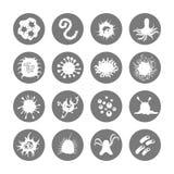 Ícones dos micróbios em círculos cinzentos ilustração stock
