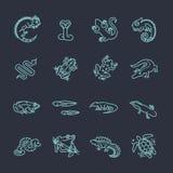 Ícones dos répteis e dos anfíbios ajustados Linha projeto ilustração royalty free