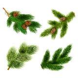 Ícones dos ramos do abeto e de pinheiros ajustados ilustração stock