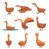 Ícones grupo do ganso, estilo dos desenhos animados ilustração do vetor