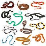 Ícones lisos da cor diferente das serpentes do veneno ajustados ilustração royalty free