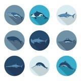 Ícones lisos das baleias e dos peixes Foto de Stock Royalty Free