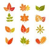Ícones lisos multicoloridos do vetor das folhas de outono Coleção da folha do feuille da queda Foto de Stock