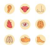 Ícones médicos, órgãos humanos e partes do corpo Fotografia de Stock Royalty Free