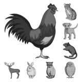 Ícones monocromáticos dos animais realísticos na coleção do grupo para o projeto Os animais selvagens e domésticos vector a Web c ilustração stock