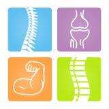 Ícones osteomusculares da imagem ilustração stock