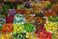 Ímãs coloridos do refrigerador Imagem de Stock