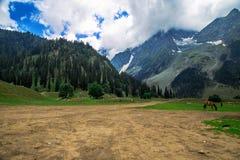 Índia de Srinagar do vale de Sonmarg Foto de Stock
