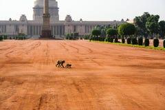 Índia no verão de 2014 Fotografia de Stock