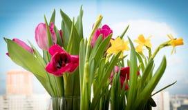 Íris amarelas de florescência e tulipas vermelhas na perspectiva do céu da mola Fotos de Stock