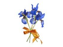 Íris azuis Foto de Stock Royalty Free