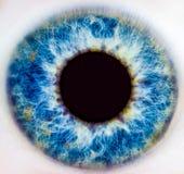 Íris de um olho humano fotografia de stock
