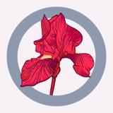 Íris vermelha Imagem de Stock Royalty Free