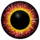 Íris vermelha do olho Fotos de Stock