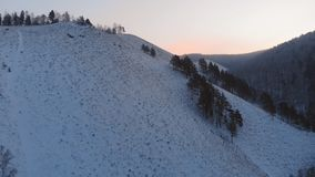 Άγρια ελάφια στο βουνό απόθεμα βίντεο