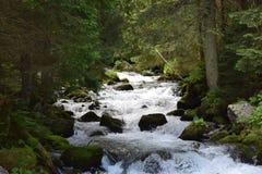 Άγριος δύσκολος ποταμός βουνών στοκ εικόνες