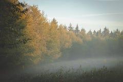 Άκρη του δάσους στο χρυσό φως του ήλιου ξημερωμάτων με την ομίχλη που κυλά μέσα μέσω των κλάδων στοκ φωτογραφία