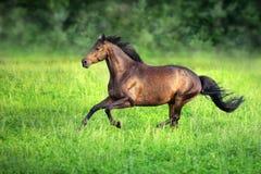 Άλογο κόλπων που οργανώνεται σε πράσινο στοκ φωτογραφία